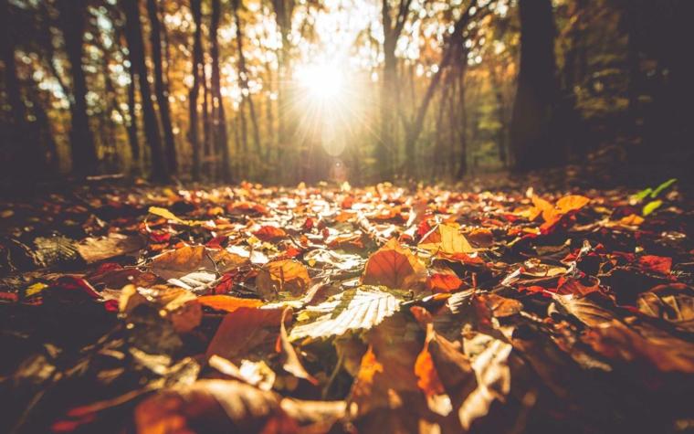 Paesaggi autunnali e un'idea per ispirarsi con una foresta e alberi con foglie cadute per terra