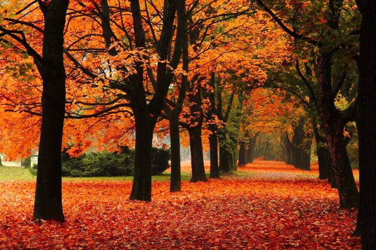 Immagini paesaggi autunnali e una foresta con tanti alberi con le foglie gialle