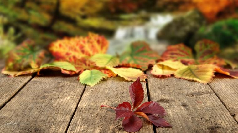 Paesaggi autunnali e un'immagine di ruscello con foglie gialle e rosse cadute