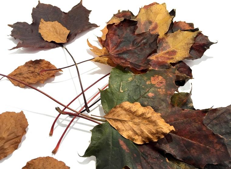 Immagini foglie autunnali, idee decorazione con degli elementi della natura
