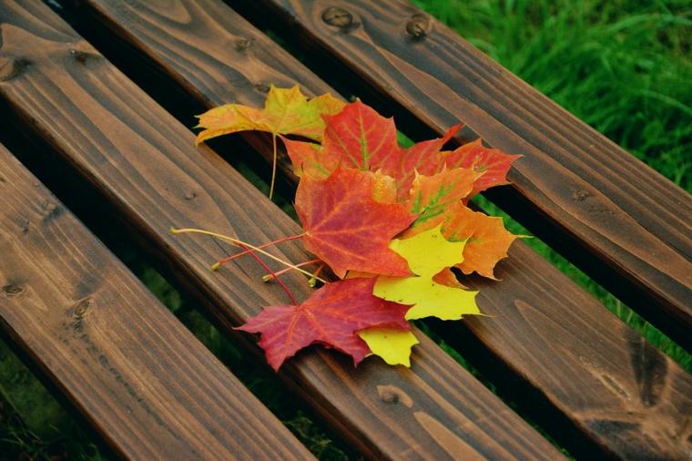 Paesaggi autunnali e delle foglie cadute di colore giallo e roso su una panchina di legno