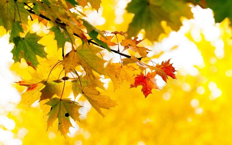 Paesaggi autunnali immagini e un'idea con un ramo dalle foglie gialle