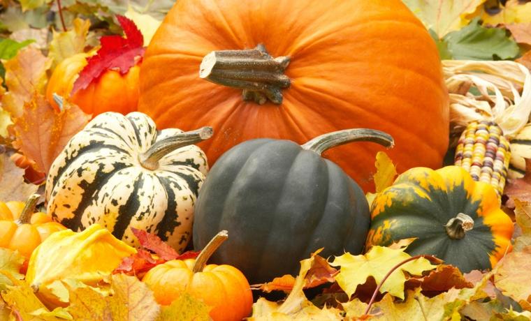 Idea per immagini autunno con zucche grandi e piccole, tante foglie secche cadute