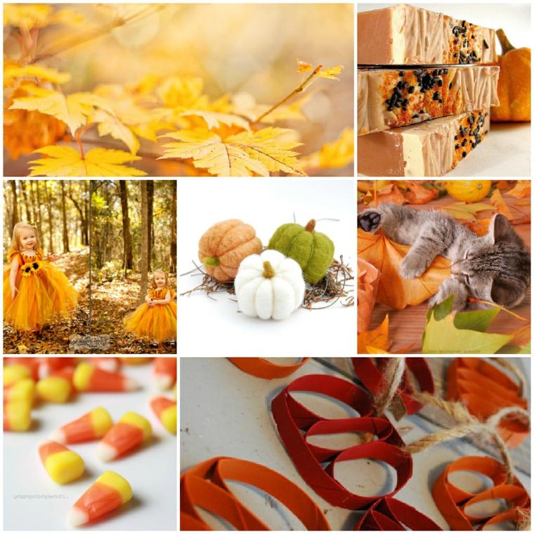 Immagini autunno e un collage di foto con dei paesaggi della stagione
