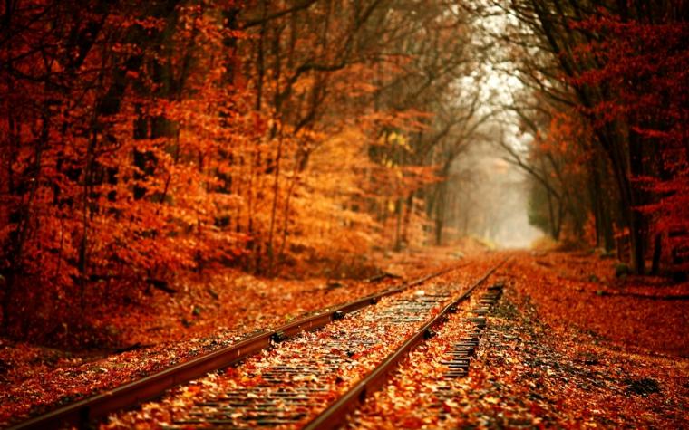 Immagini autunno con una foresta di alberi dalle foglie gialle e una strada ferrata
