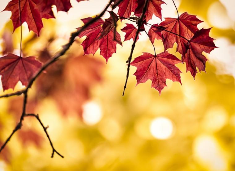 Immagini autunnali bellissime e un ramo di albero con le foglie di colore rosso