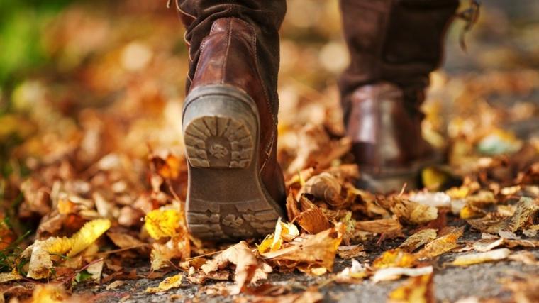 Immagini autunno e tante foglie secche di colore giallo per terra
