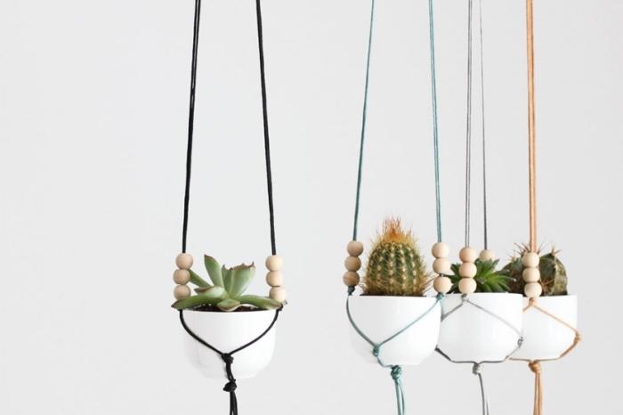 Merletti e pizzi larghi per la decorazione delle piante grasse in casa