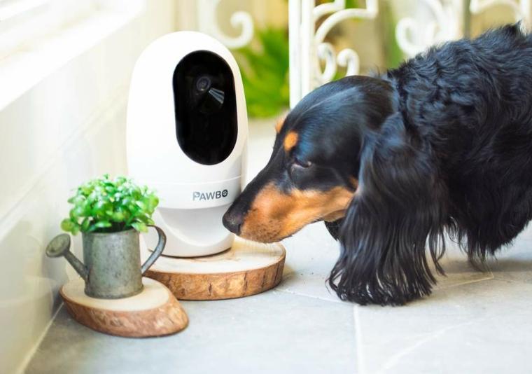 Idee regalo uomo compleanno, una video camera per il cane