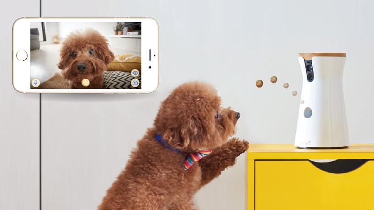Cosa regalare ad un uomo per il suo compleanno, una video camera per l'animale domestico