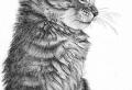 Imparare a disegnare con la matita: fare delle opere d'arte da soli
