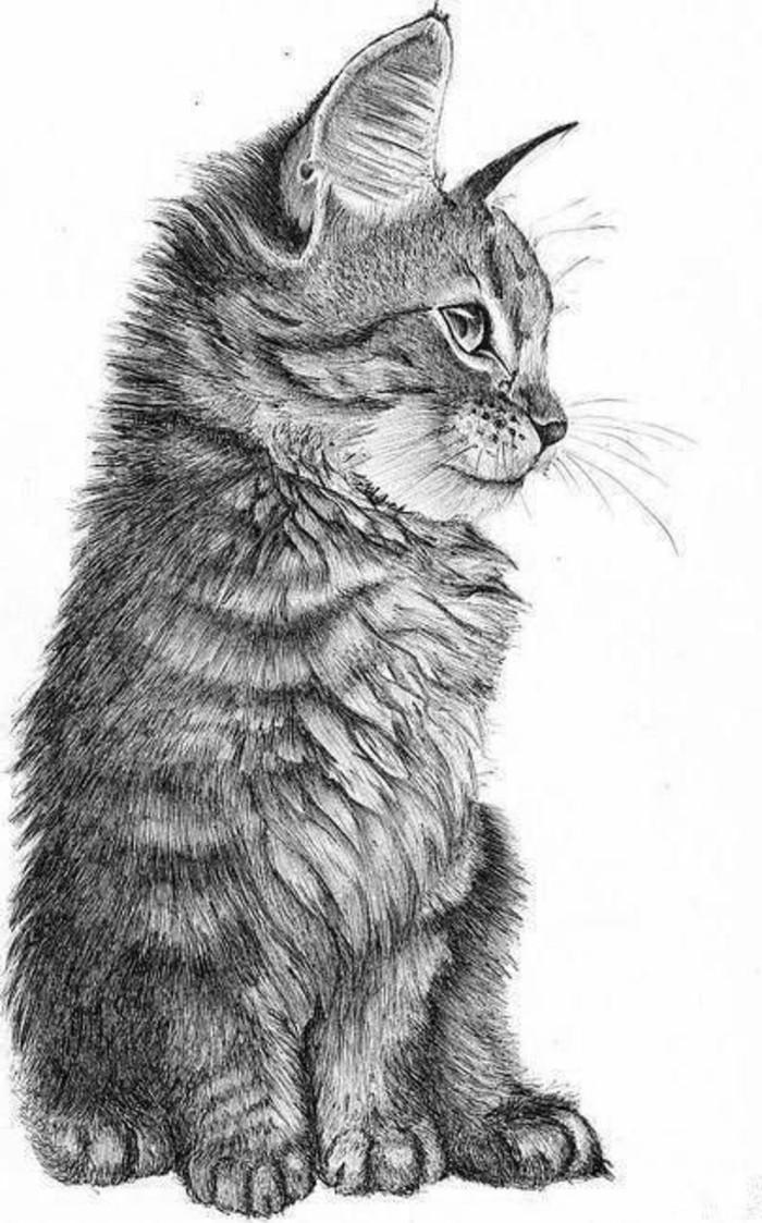 Immagini da disegnare a matita, disegno di un gatto, animale domestico gatto