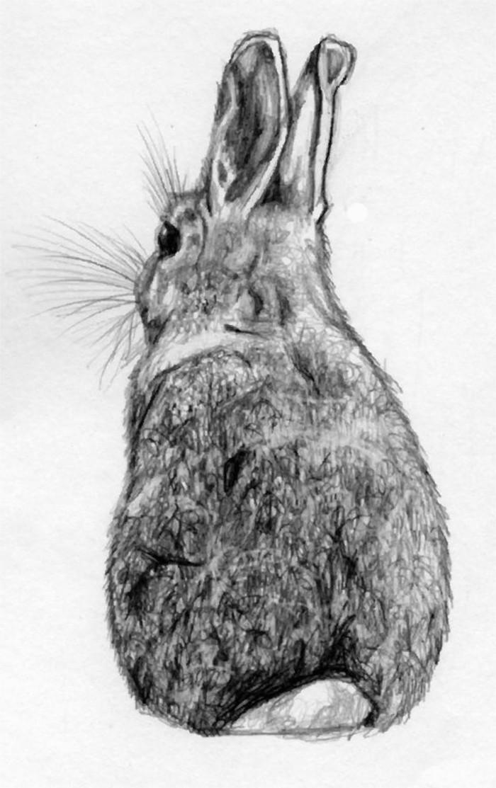 Immagini da disegnare a matita, disegno di un coniglio