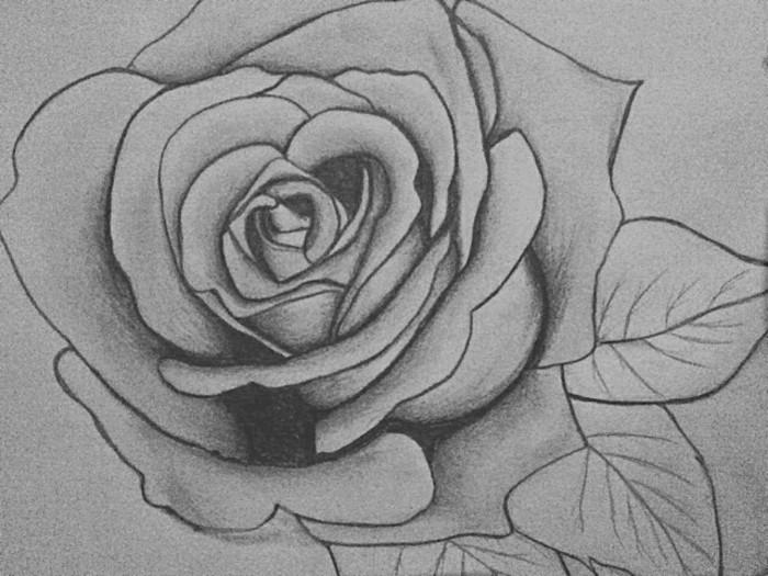 Disegni a matita facili ma belli, disegno di una rosa