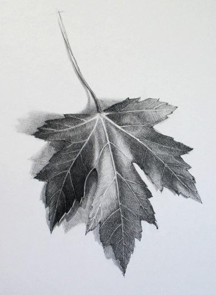 Idea per disegni a matita facili ma belli, una foglia di uva secca