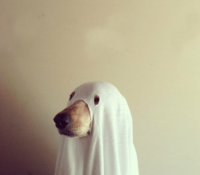Costumi halloween fai da te, cane travestito da fantasma, lenzuolo bianco con buchi per gli occhi