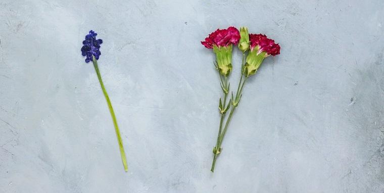 Due fiori colorati, idee regalo festa della mamma economiche