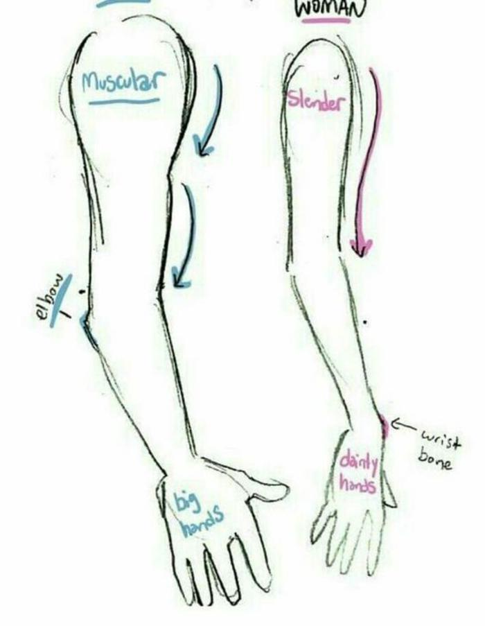 Come disegnare un braccio, braccio uomo e donna