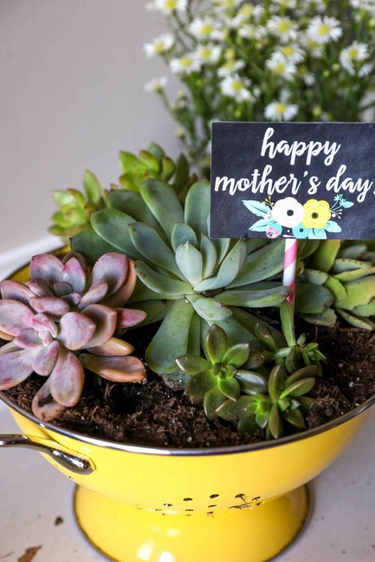 Colino per pasta, vaso fai da te per piante, piante grasse, biglietto per la festa della mamma