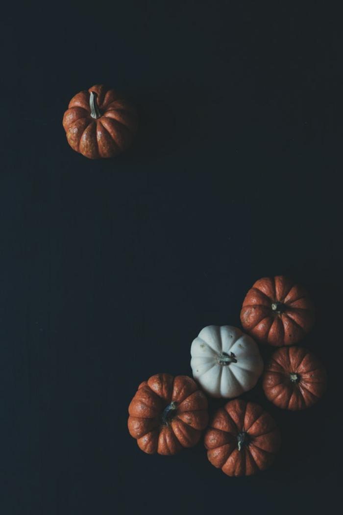 Foto di zucche, zucche arancioni e bianca, foto per il cellulare