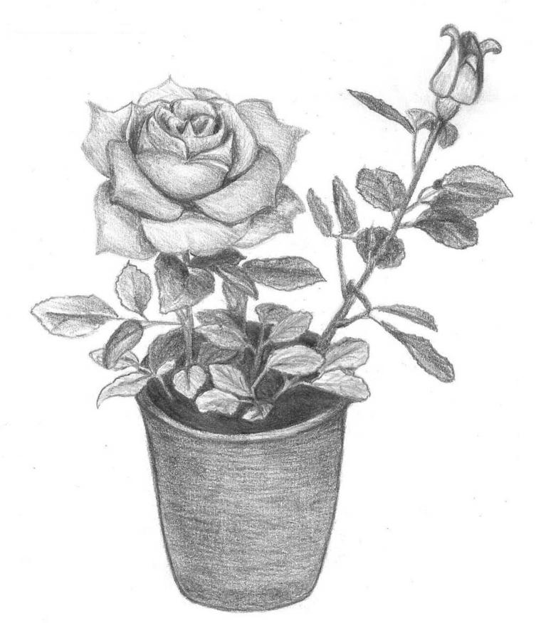 Fiori facili da disegnare, vaso con rosa, schizzo a matita