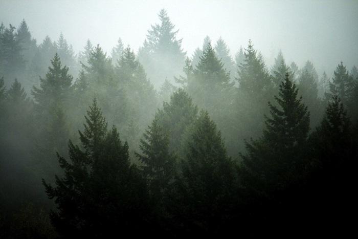 Foresta nella nebbia, alberi verdi, immagini sfondi tumblr