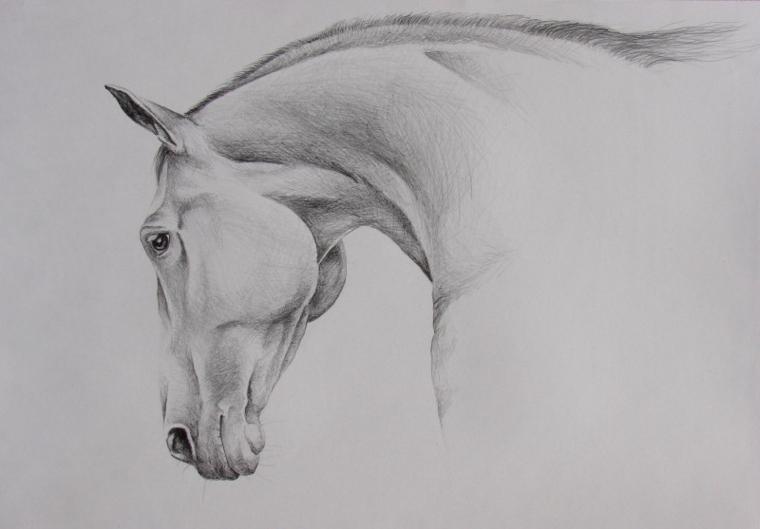 Schizzo a matita, abbozzo di un cavallo, oscurare con la matita