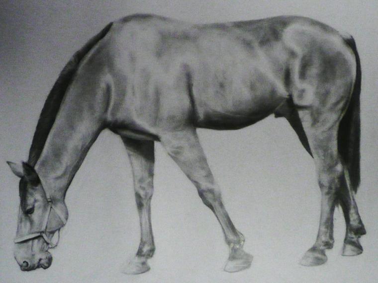 Disegno realistico, schizzo di un cavallo, chiaro scuro con matita