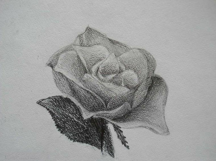 Schizzo su foglio ruvido, disegno di una rosa