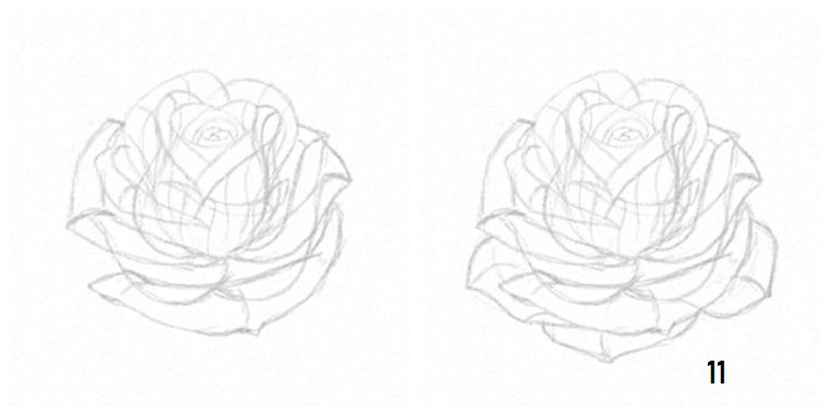Disegni di fiori a matita, disegno di una rosa, petali di una rosa