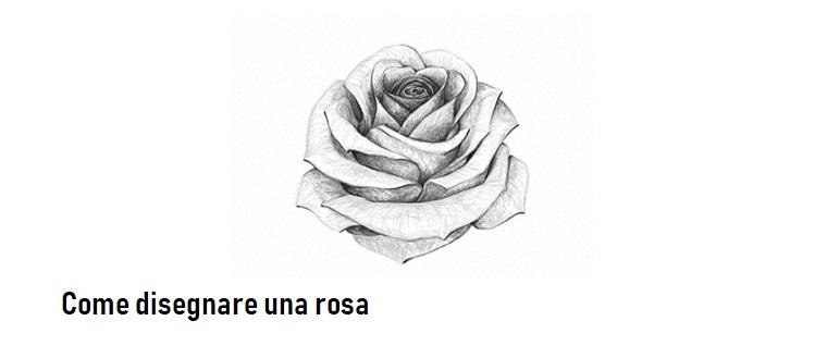 Disegni di fiori a matita, disegno di una rosa, sfumature con chiaro scuro