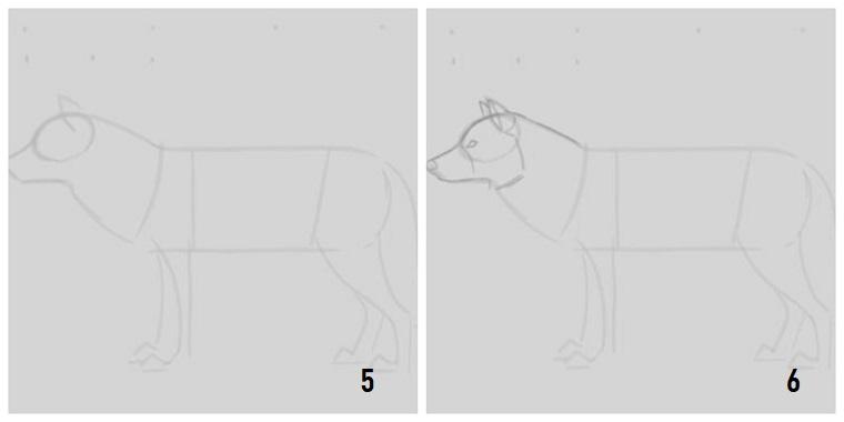 Disegni da copiare facili e belli, passaggi da seguire, disegnare con la matita