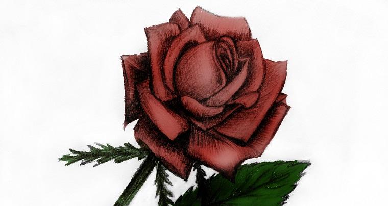 Fiori facili da disegnare, disegno di una rosa, rosa con petali rossi