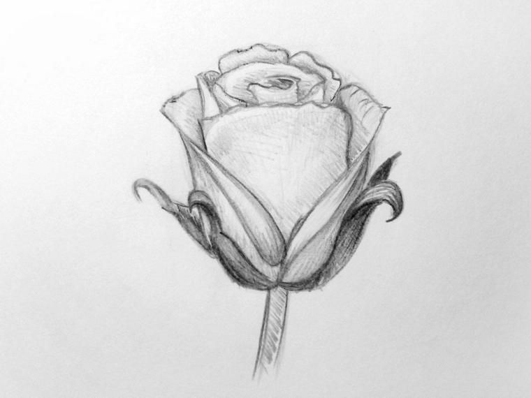Schizzo di una rosa, petali con sfumature, disegno su un foglio ruvido