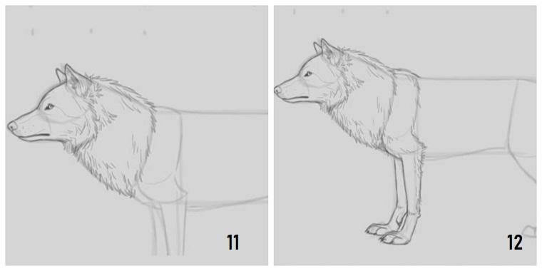 Cose facili da disegnare, tutorial per disegnare un lupo, pelo lungo