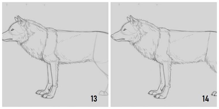 Disegni tridimensionale, passaggi per disegnare un lupo
