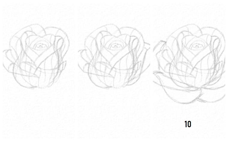 Petali di una rosa, come disegnare una rosa, passi tutorial