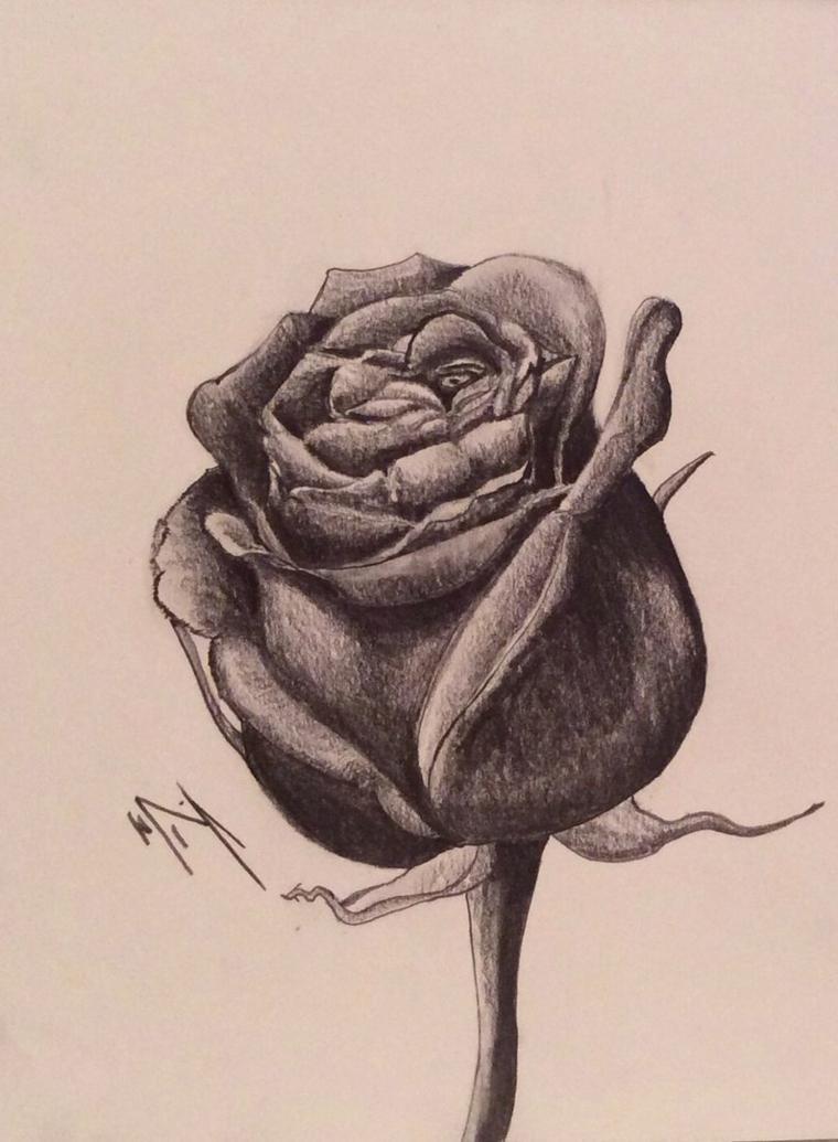 Schizzo a matita, disegni rosa stilizzata, sfumature con chiaro scuro
