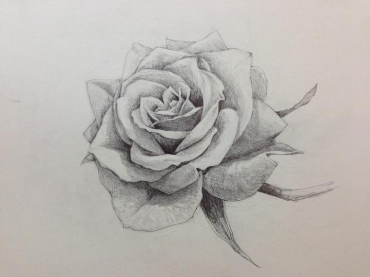 Disegni facili da disegnare a mano libera, disegno di una rosa