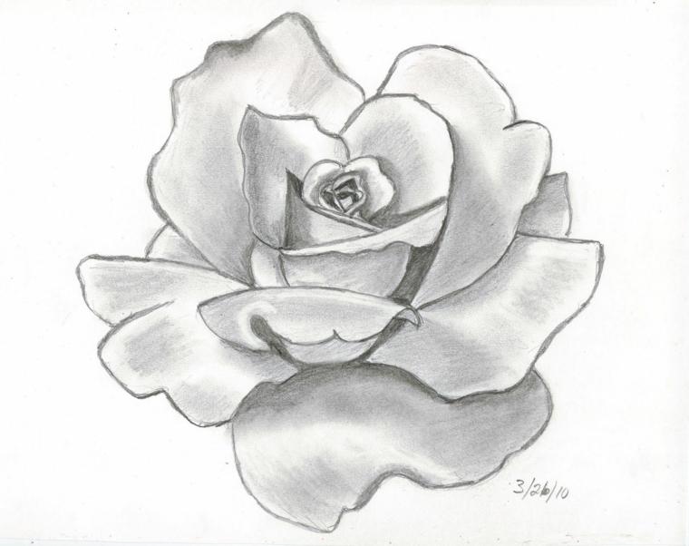 Rose disegnate, schizzo a matita, disegno con sfumature