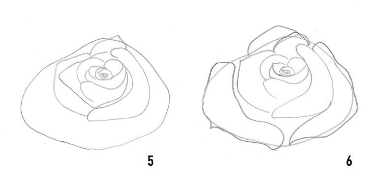 Come disegnare una rosa, disegno a matita, schizzo di una rosa