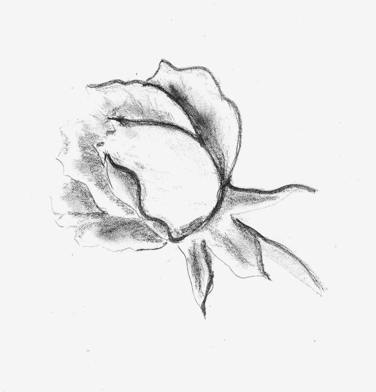 Schizzo a matita di una rosa, disegno a matita, sfumature con chiaro scuro