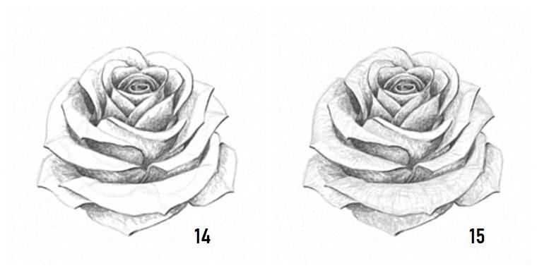 Come disegnare fiori realistici, disegno a matita di una rosa, sfumature con chiaro scuro