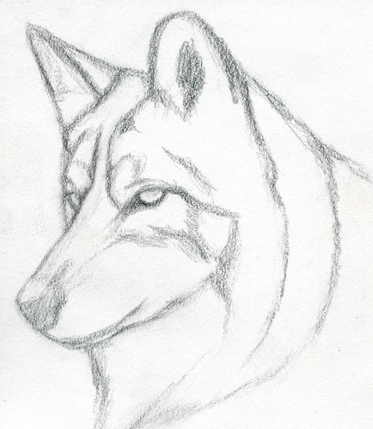 Impara a disegnare, disegno di un lupo, oscurare con la matita