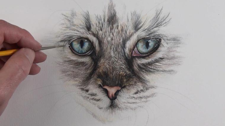 Schizzo di un gatto, disegnare con la matita, disegni belli ma facili