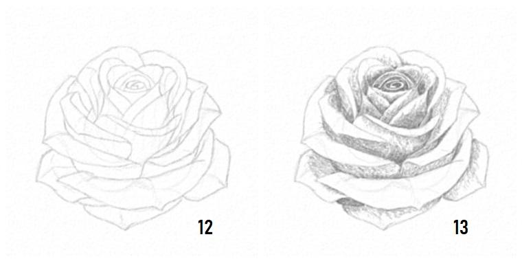 Disegno rosa stilizzata, petali di una rosa, sfumature con chiaro scuro