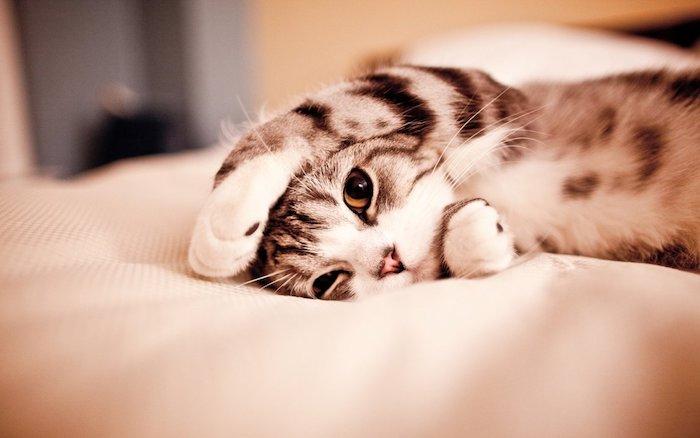 Immagini tumblr sfondi, fotografia di un gatto, gatto che dorme sul letto