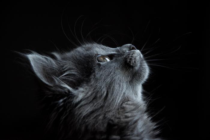 Immagini tumblr sfondi, foto di un gatto, wallpaper con sfondo nero