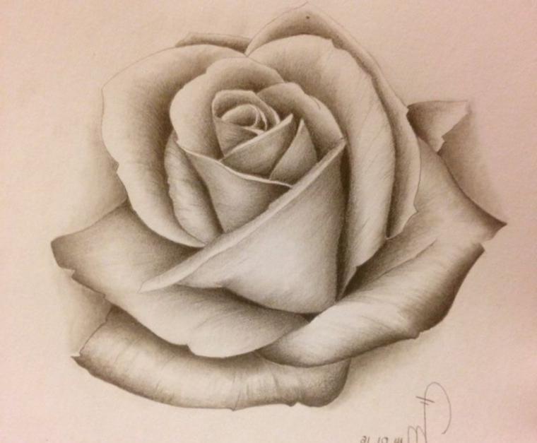 Disegno vintage, schizzo di una rosa, petali con punti di luce