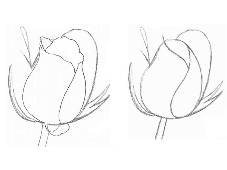 Disegno di una rosa, schizzo a matita, come fare i petali